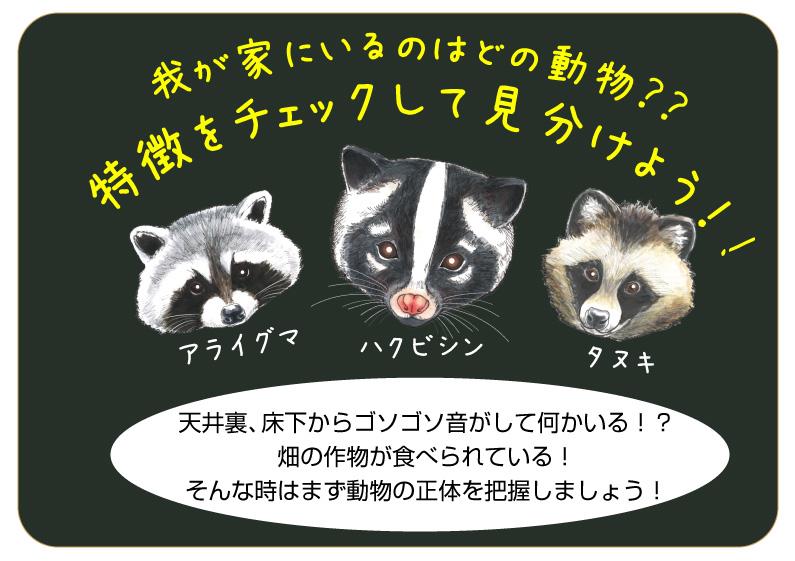 ハクビシンと似ている動物の見分け方