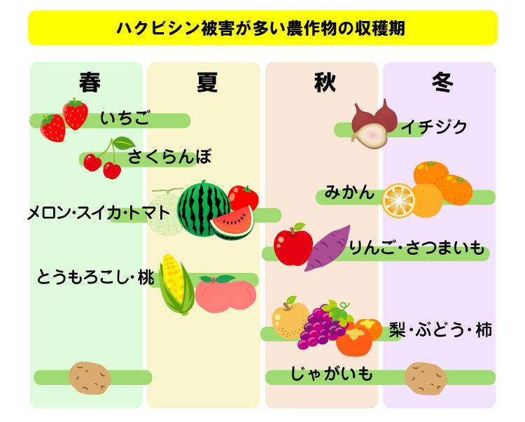 ハクビシンの被害が多い果物・野菜リスト