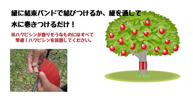 hakubishin_tree-set