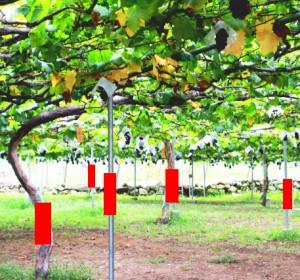 set-tree