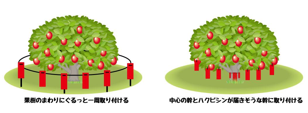 低い果樹の忌避剤取り付け方